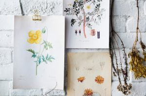 Unframed botanical prints on an exposed brick wall including dried flowers for inspiration