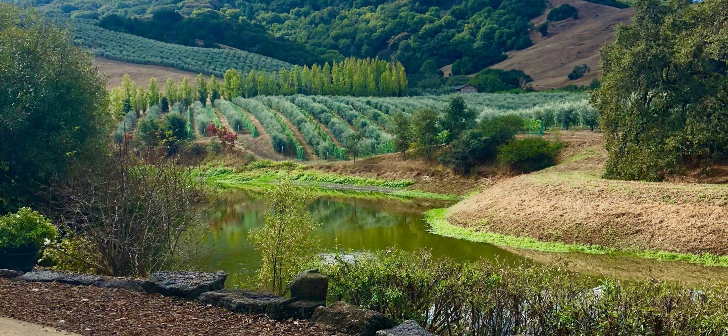 Luxe du Jour In California's Wine Country – A Month To Remember