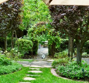 Beautiful walkway with kitty in the background. Lots of greenery and plantings