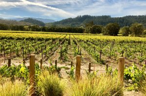 Gorgeous view of vineyard with Napa river and hills in the background